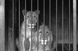 What to Do if You Feel Caged In